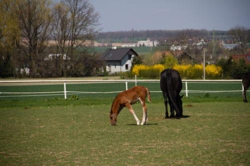 Prague, Balade, Republique tchèque, kladruber, kladruber horse, kladruber national stud, le carnet de calli